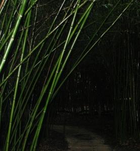 Bamboo trail at Kanapahaaaaaaaahhhhhhhh......